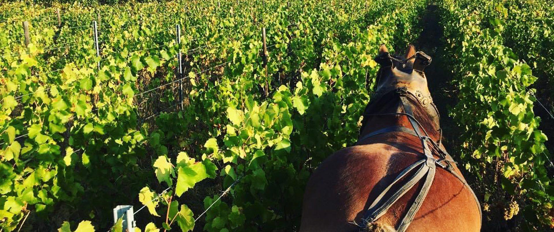 【公式オンラインショップ】自然派ワイン直輸入 クロスロード
